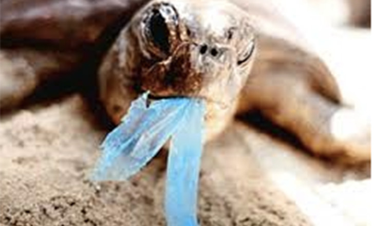 tortuga comiendo basura